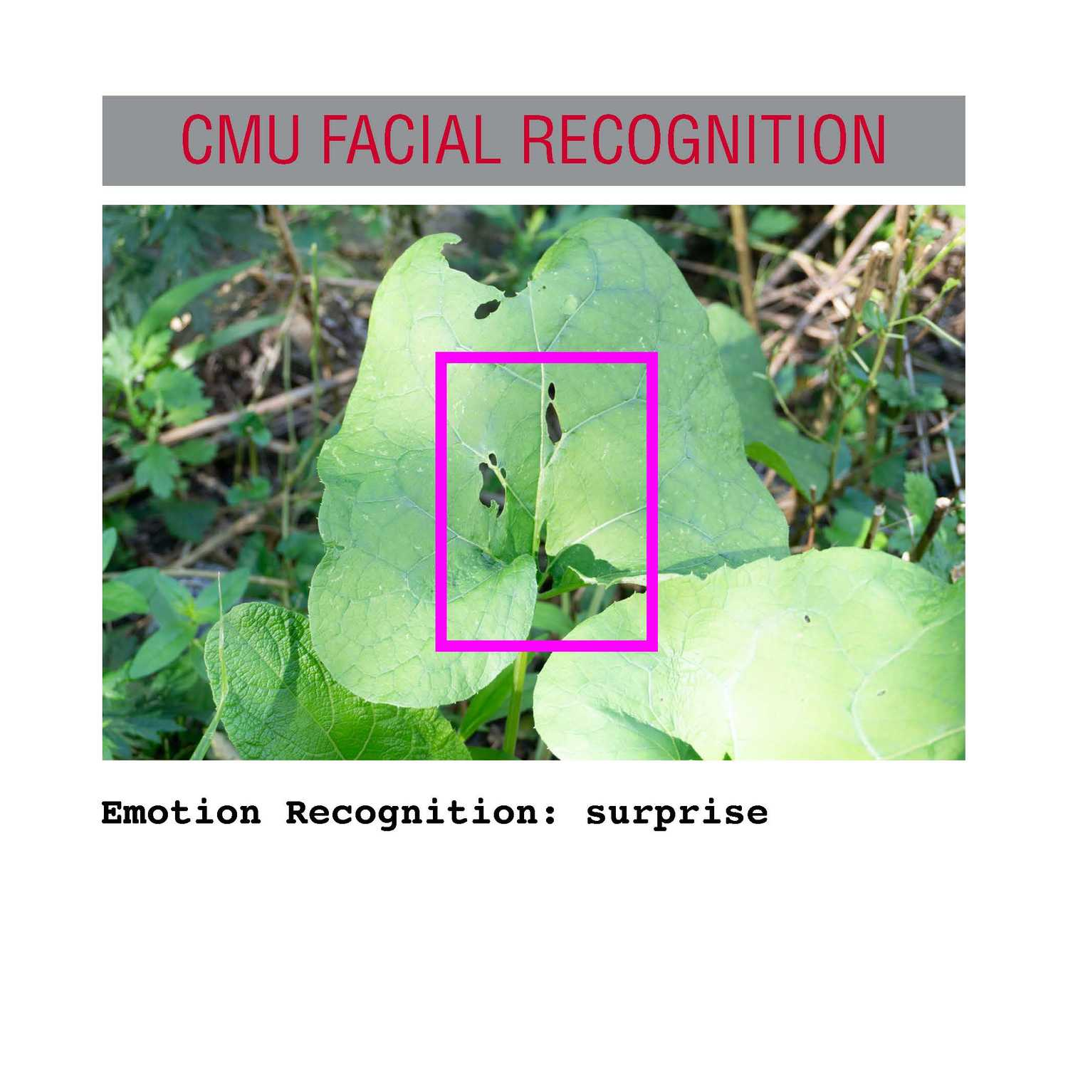 facial recognition Page 11